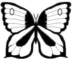 farfalla carta bianca