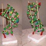 modello DNA